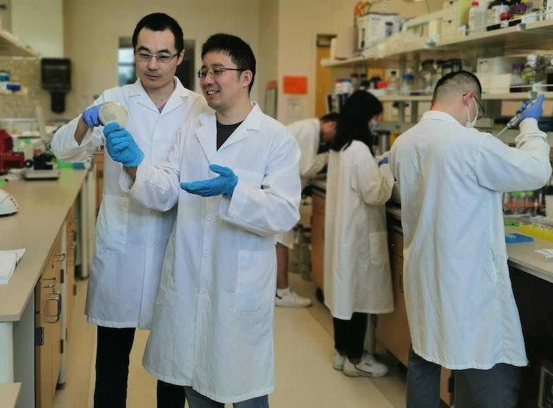 Yi Wang (far left), associate professor in the Department of Biosystems Engineering, works with his post-doc Yuechao Ma (middle) in the lab. The research from Wang's lab for renewable fatty acid ester production has been recently published and highlighted by the journal of Nature Communications.