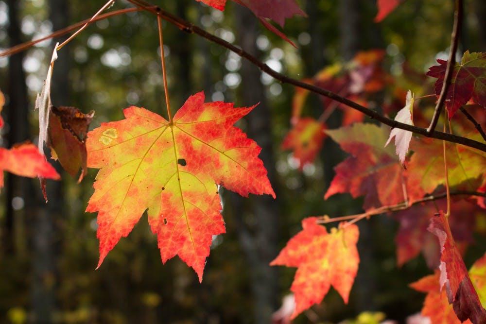 Break for fun: What to do in Auburn over fall break