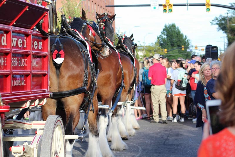GALLERY: Budweiser Clydesdales parade | 10.05.17