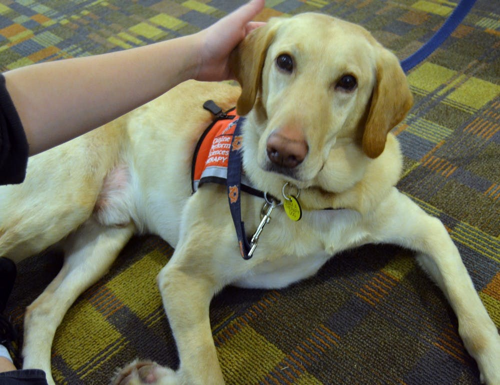 Detection dogs retrain to help with therapy sessions
