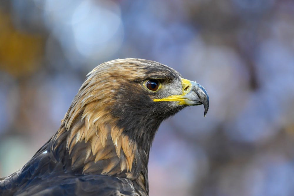 Raptor trainer shares the life of a War Eagle