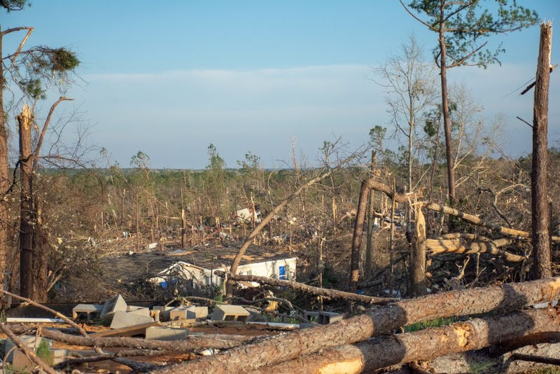Trees are split in half and homes severely damaged and destroyed on March 4, 2019, in Beauregard, Alabama, after a tornado killed 23 people and left dozens of other injured and without homes.