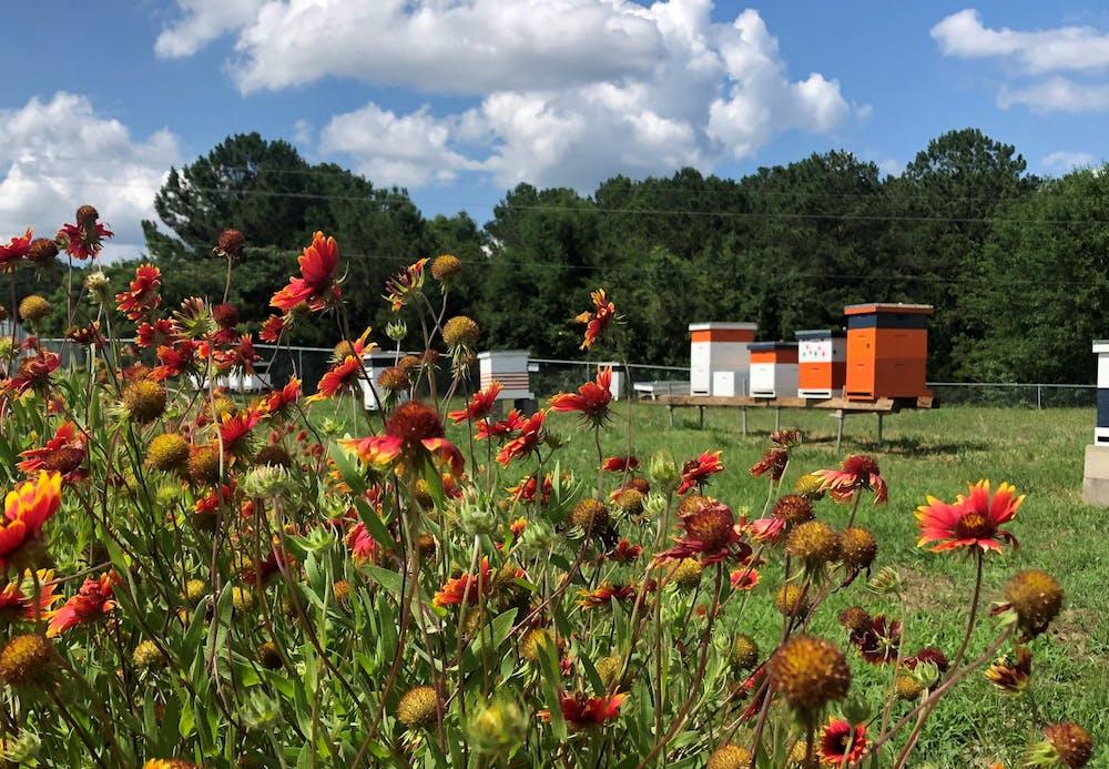Auburn's Bee Lab begins annual honey sale