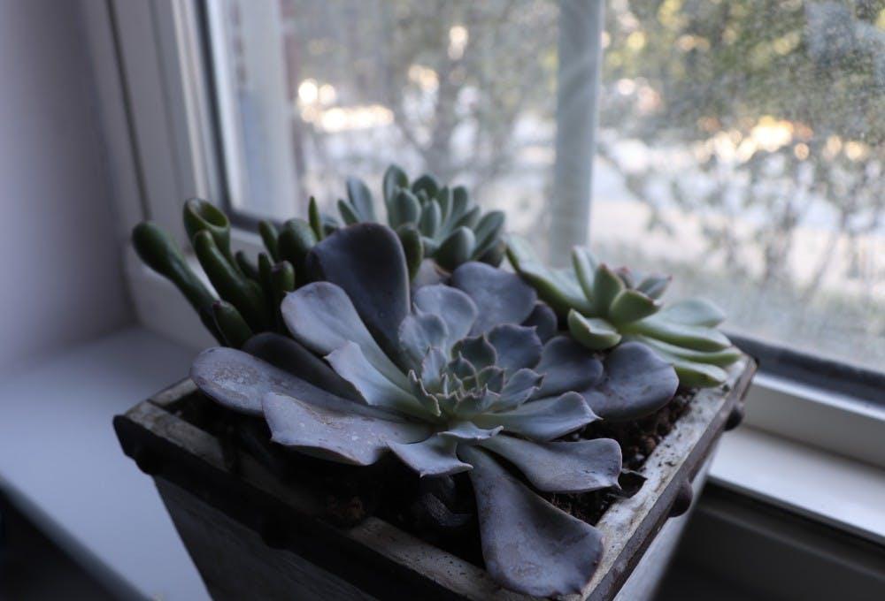 The health benefits of having houseplants in college
