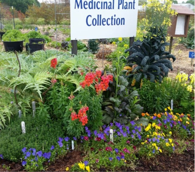 A collection of plants at the Medicinal Garden.