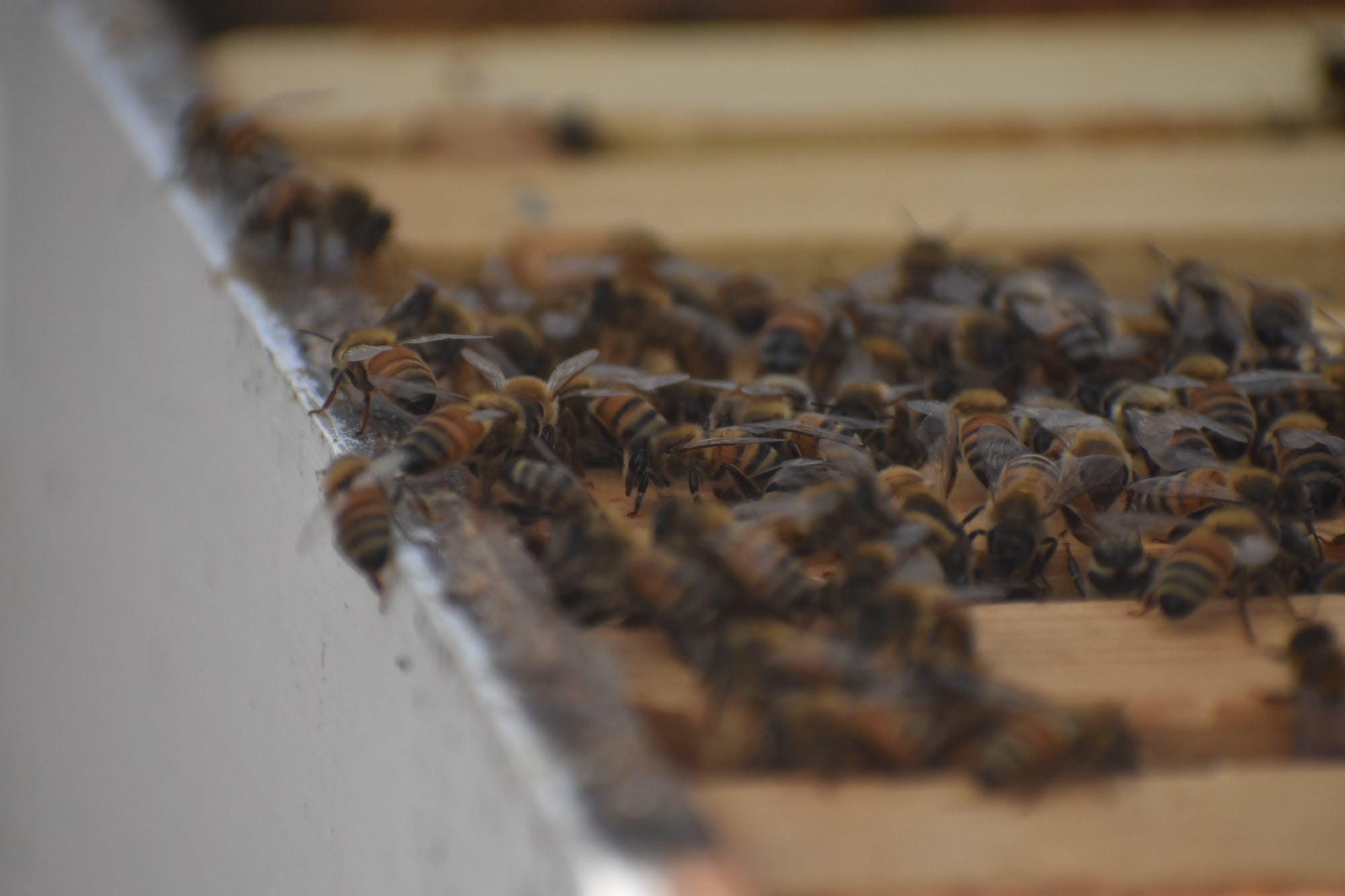 Keeping It Local: How a student became a beekeeper and how beekeeping impacts Auburn ecology