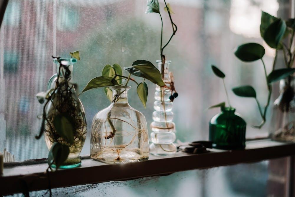 Guide to dorm houseplants