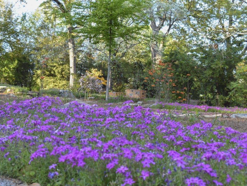 Floral Trail open and blooming