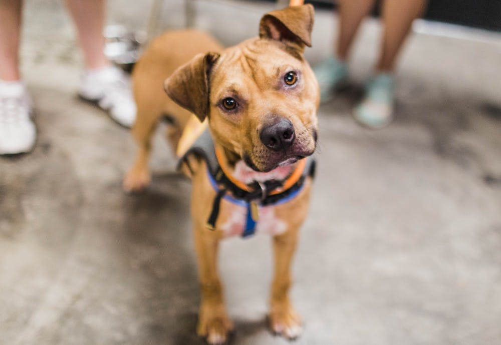 Auburn Athletics welcomes pets