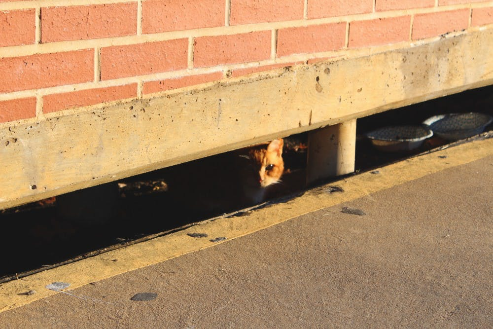 Drain cat catches hearts on campus