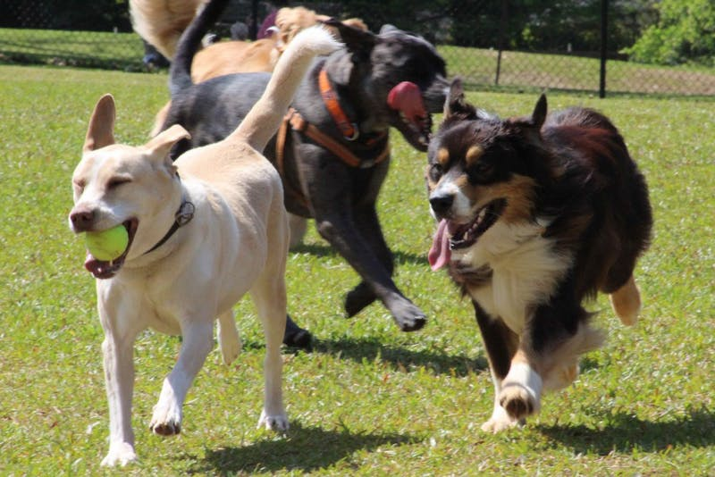 Several dogs run the length of the Opelika Dog Park large dog enclosure on Saturday, April 14, 2018, in Opelika, Ala.