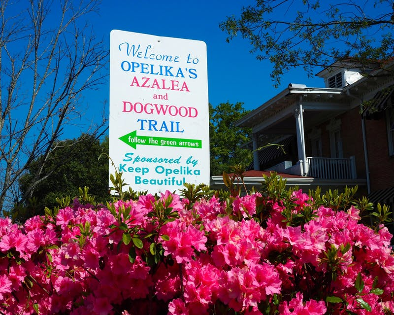 Opelika's Azalea and Dogwood Trail is an annual event when flowers blossom in the spring.