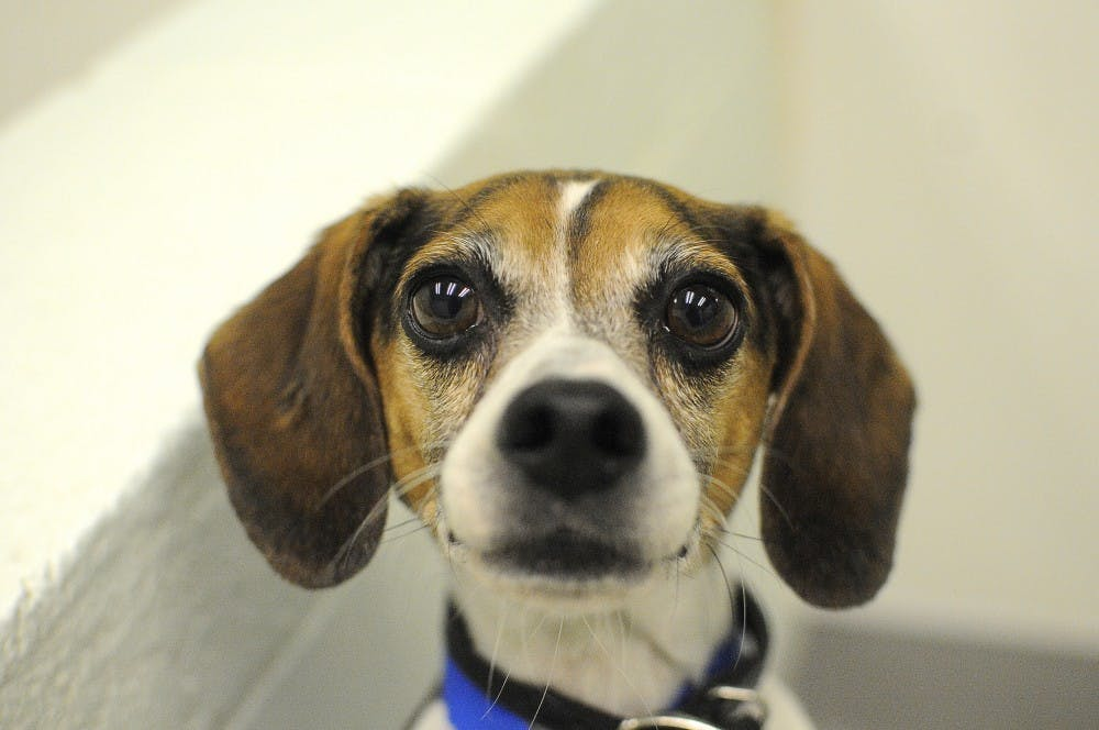 More than puppy love: working for the Lee County Humane Society