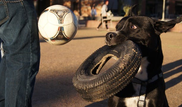 n35feature_soccerdogrgbgd