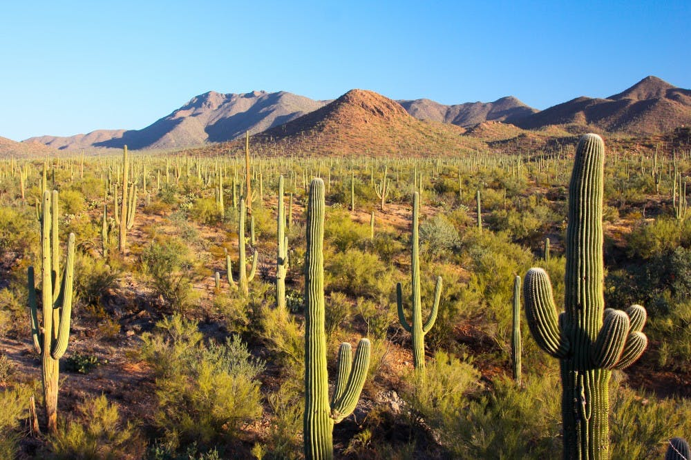 saguaro_national_park__flickr__joe_parks