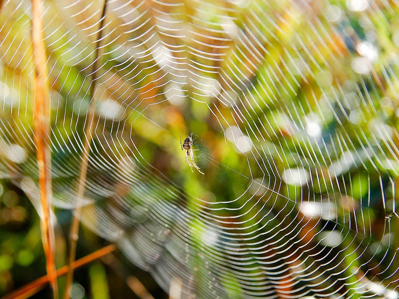 Spiderweb_Structure_Luc-Viatour-Wikimedia