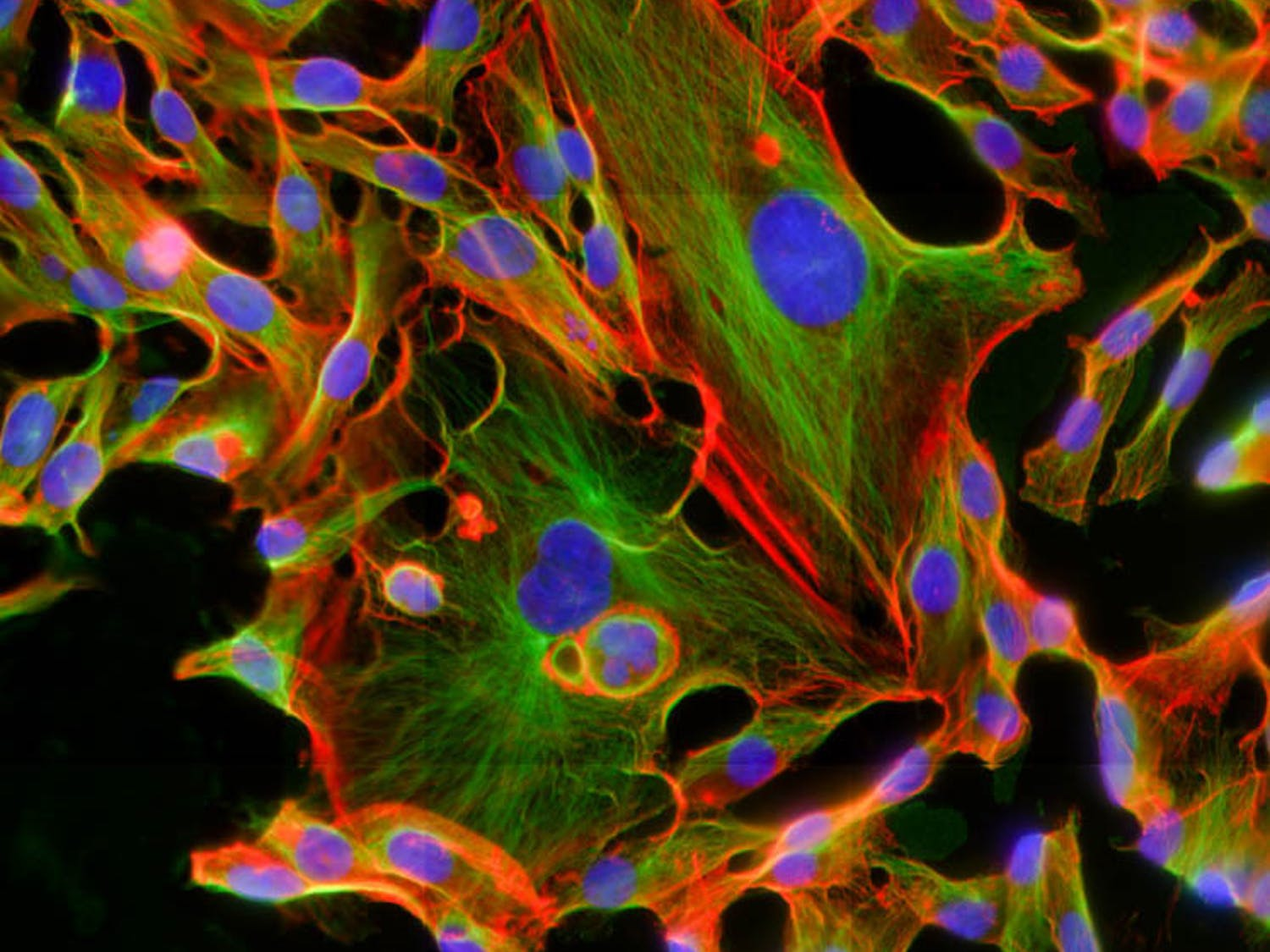 Hrabarchuk_Cancer-Cell-Research_CO_Michelle-Dawson
