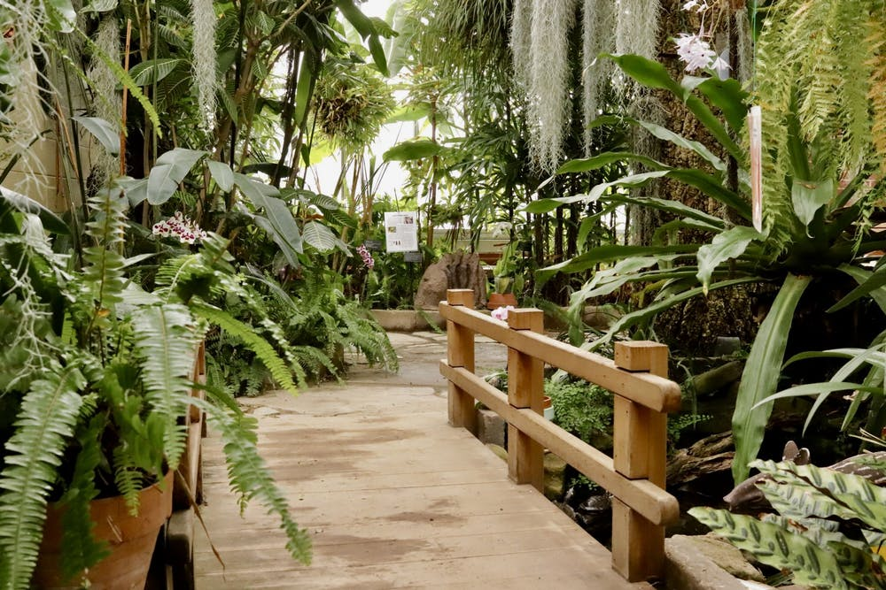 <p>On March 20, the Rinard Orchid Greenhouse will celebrate the 50th anniversary of its Wheeler-Thanhauser Orchid Collection. The greenhouse has the largest collegiate collection of orchids in the United States. <strong>Rylan Capper, DN</strong></p>