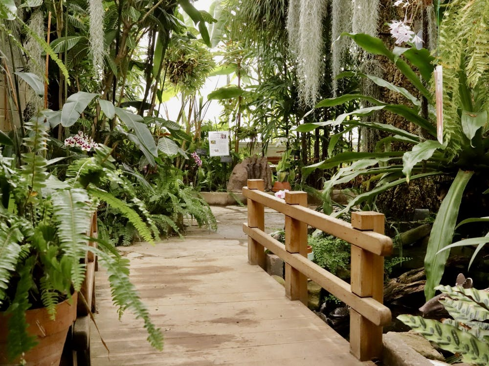 On March 20, the Rinard Orchid Greenhouse will celebrate the 50th anniversary of its Wheeler-Thanhauser Orchid Collection. The greenhouse has the largest collegiate collection of orchids in the United States. Rylan Capper, DN