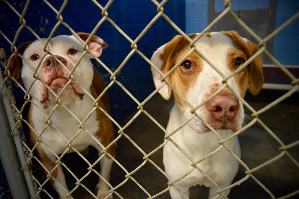 <p>After 18&nbsp;years of being a no-kill shelter, Muncie's Animal Rescue Fund (ARF) will be expanding in an effort to help more animals and their owners receive services and the care they need to live healthy lives.&nbsp;<em>DN FILE&nbsp;PHOTO REBECCA KIZER</em></p>