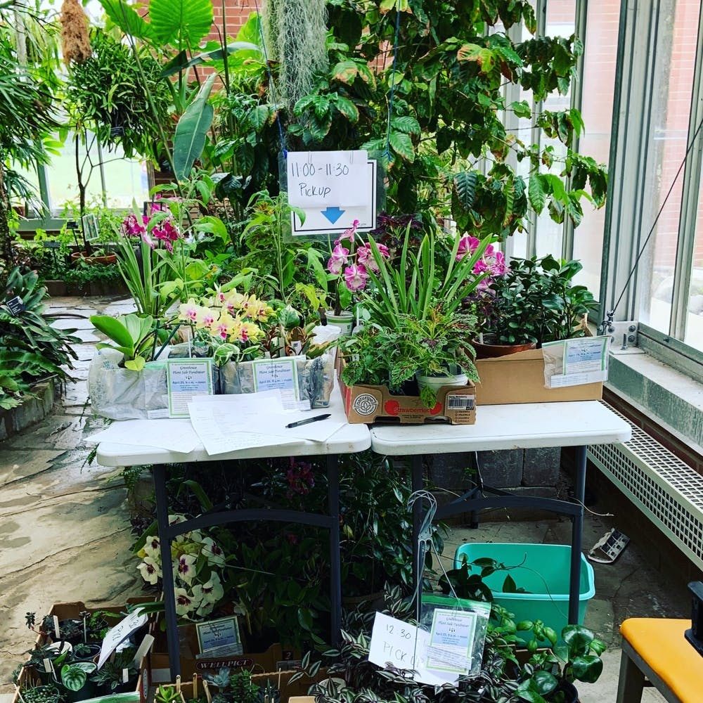 <p>This photo shows plants that have been purchased placed on a table at Ball State's Rinard Orchid Greenhouse. These plants were purchased through the greenhouse's annual sale which was held online this year. <strong>Erica Forstater, Photo Provided</strong></p>