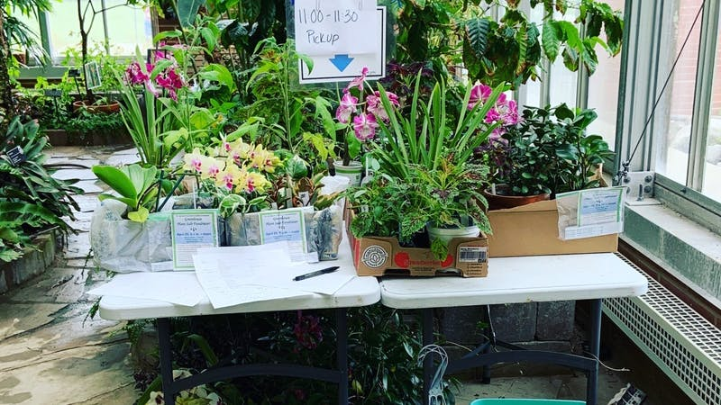 This photo shows plants that have been purchased placed on a table at Ball State's Rinard Orchid Greenhouse. These plants were purchased through the greenhouse's annual sale which was held online this year. Erica Forstater, Photo Provided