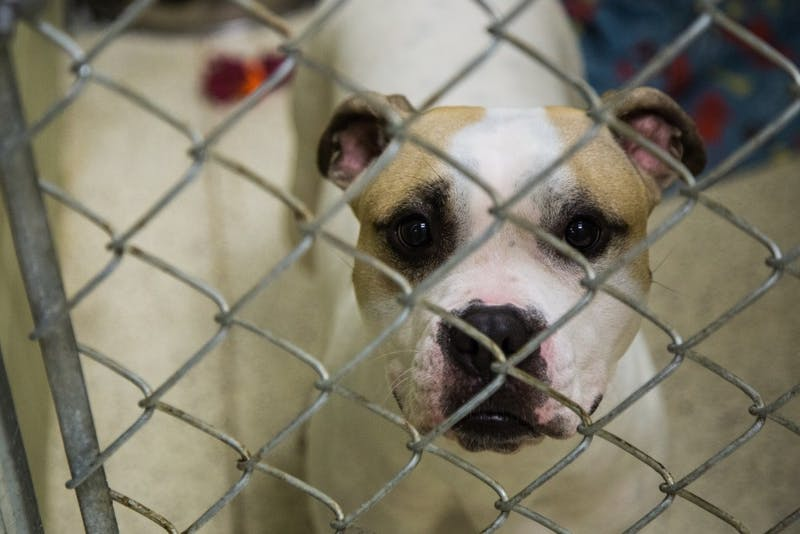 The Muncie Animal Care & Services is at maximum capacity again. The shelter offers special adoption deals for the cats and dogs to find forever homes. Reagan Allen, DN File