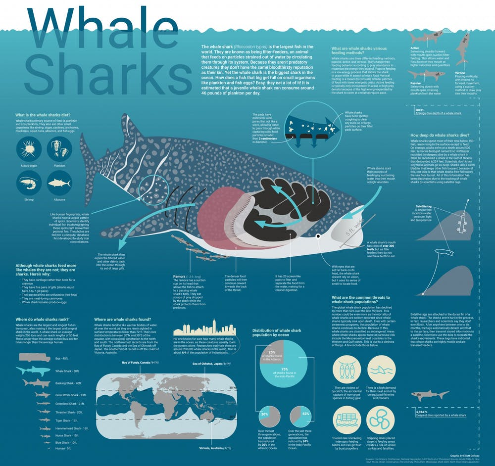 Learn more about whale sharks