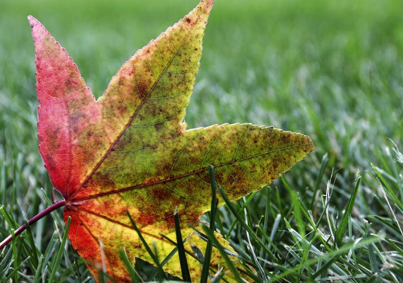 9 tips to help you survive fall break