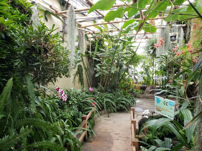 The tropical rainforest recreation is the first thing guests view when they walk in Jan. 12, 2019, at the Rinard Orchid Greenhouse. Temperatures were hot and muggy in this room. Scott Fleener, DN