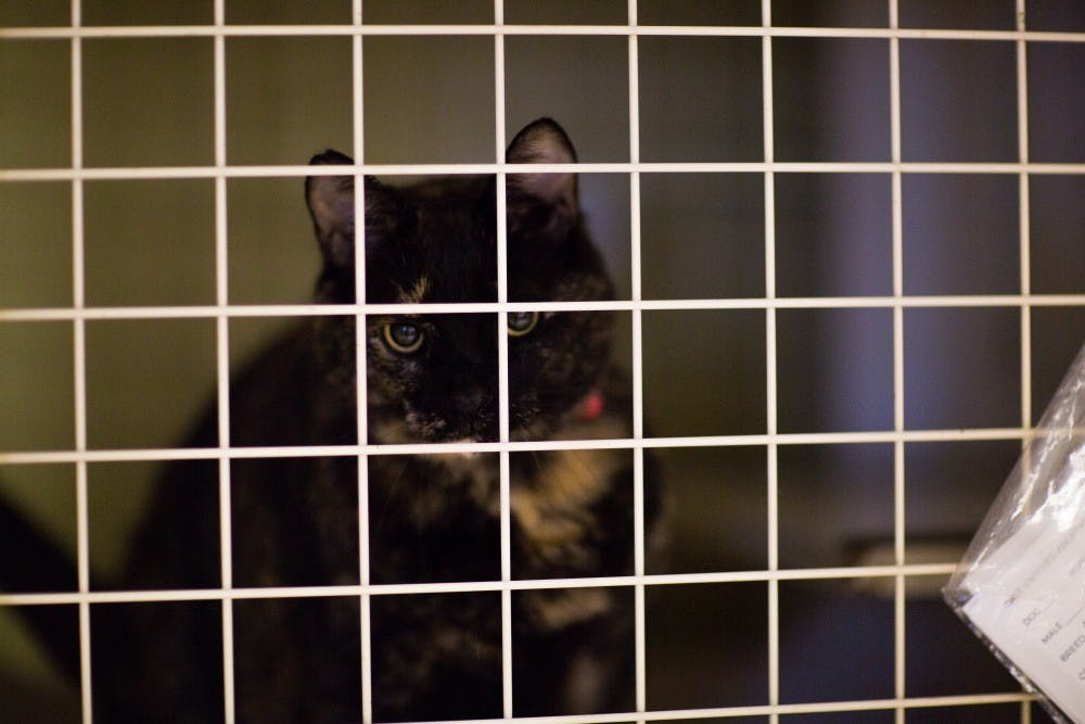"A cat looks through the grates of its cage at the Muncie Animal Shelter, June 23, 2017. The shelter is holding the 24 hour ""Twelve Strays of Christmas"" and is providing $5 dog adoptions and $1 cat adoptions. Reagan Allen, DN"