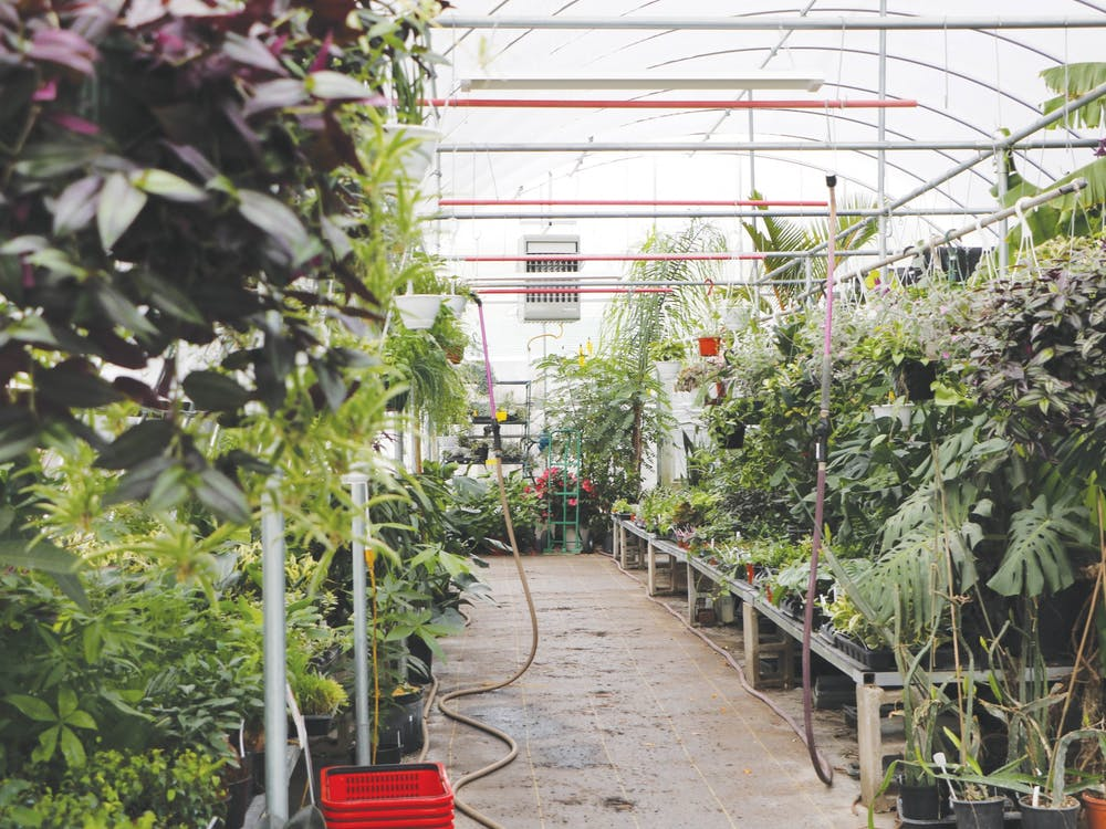 The Northern Tropics Greenhouse stores tropical plants inside one of its greenhouses Oct. 15. Owner Sandy Burrell partnered with local businesses and friends to sell items such as honey, soap and crystals along with her plants. Ayah Eid, DN