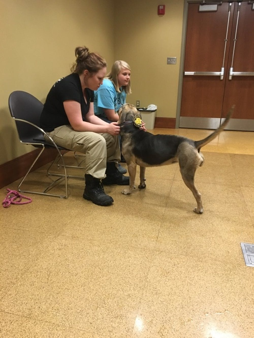 <p>Park Hall hosted a puppy playground on Feb. 16 in the seminar room. This is the second year the Muncie Animal Shelter and Ball State gave students the opportunity to play with dogs at Puppies in Park. <em>DN PHOTO VICTOR HAMILTON</em></p>