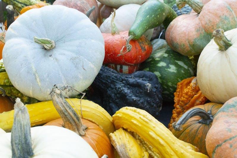 Spangler Farms in Yorktown is the pumpkin sponsor for the Pumpkin Trail & Glow at the Muncie Artswalk on Thursday. The Farm is donating 100 pumpkins to DWNTWN Muncie for the First Thursday event. Bailey Shelton,DN