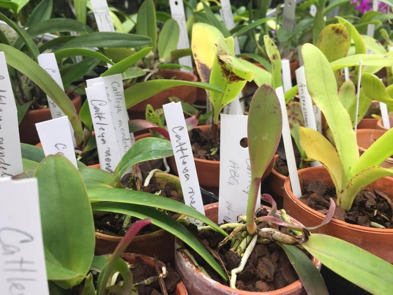 Plants were on display in the Rinard Orchid Greenhouse during the monthly Lunch at the Greenhouse program Oct. 4. Ball State community members can particpate on the first Wednesday of every month from noon to 1 p.m. Samantha Johnson, Unified Media
