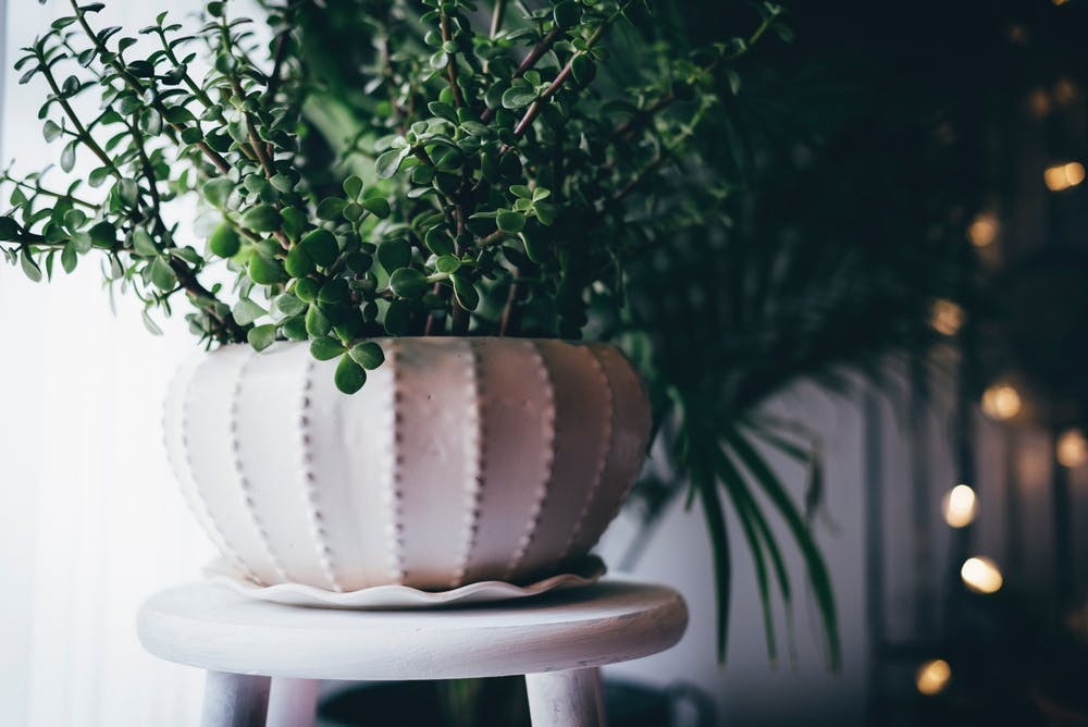 Plant parenting: tips to help you take care of your indoor plants