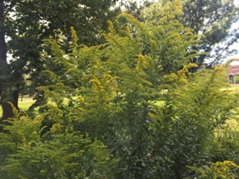 Fall allergies will soon return with start of new season