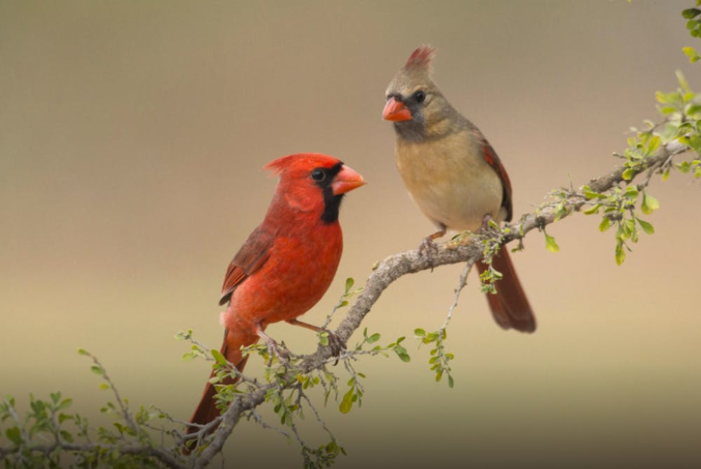 Indiana DNR asks Hoosiers to remove bird feeders amid reports of dying songbirds