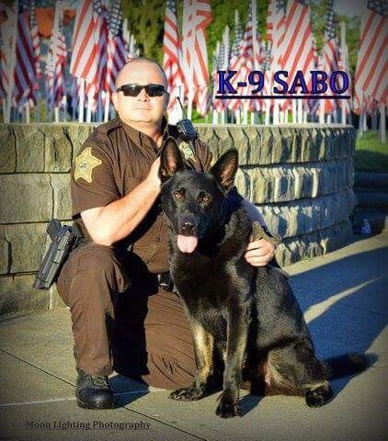 The Delaware County Sheriff's Office is currently fundraising to purchase a new K-9 officer after the loss of German Shepherd K-9 Sabo in July. Sabo, a narcotics K-9, developed an acute debilitating degenerative bone condition. Jerry Parks // Photo Provided