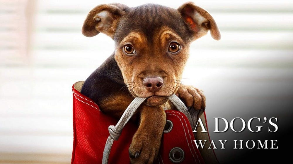 'A Dog's Way Home' strives for greatness, but lacks overall bite