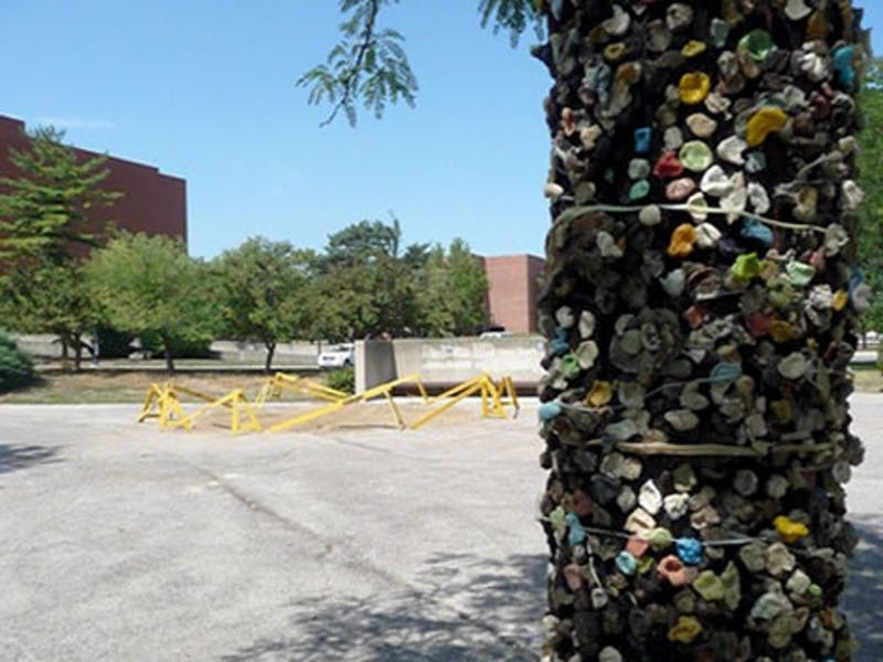 Gum Tree, one of Ball State's well-known landmarks, sits east of Pruis Hall.