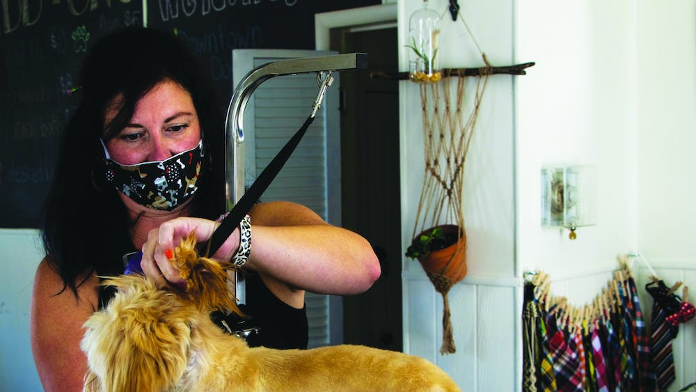 Jenn Morgan, the owner of Downtown Dogs, grooms Rocky, an 8-month-old Shih Tzu, Aug. 24 at Downtown Dogs. Rocky yawned and panted as Morgan trimmed and brushed their fur. Nicole Thomas, DN