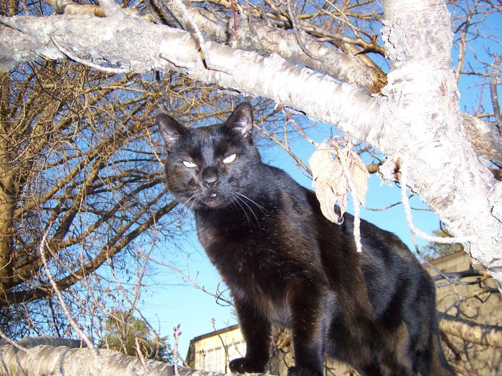Assistant professor of English Michael Begnal owns a 12-ish-year-old cat named Poppy. Before Begnal took in Poppy, the cat was a wildhomeless cat that was living outdoors.Michael Begnal // Photo Provided