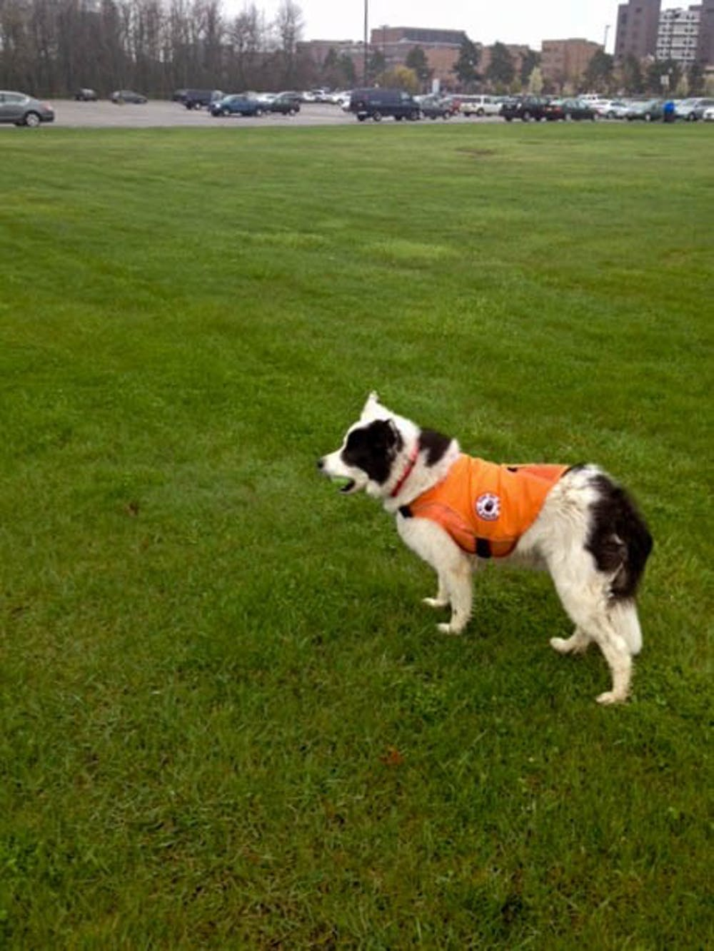 <p>In 2016, UB hired Borders on Patrol to address the large number of nuisance geese on campus. The company utilizes border collies to chase and harass geese off certain areas on campus.</p>