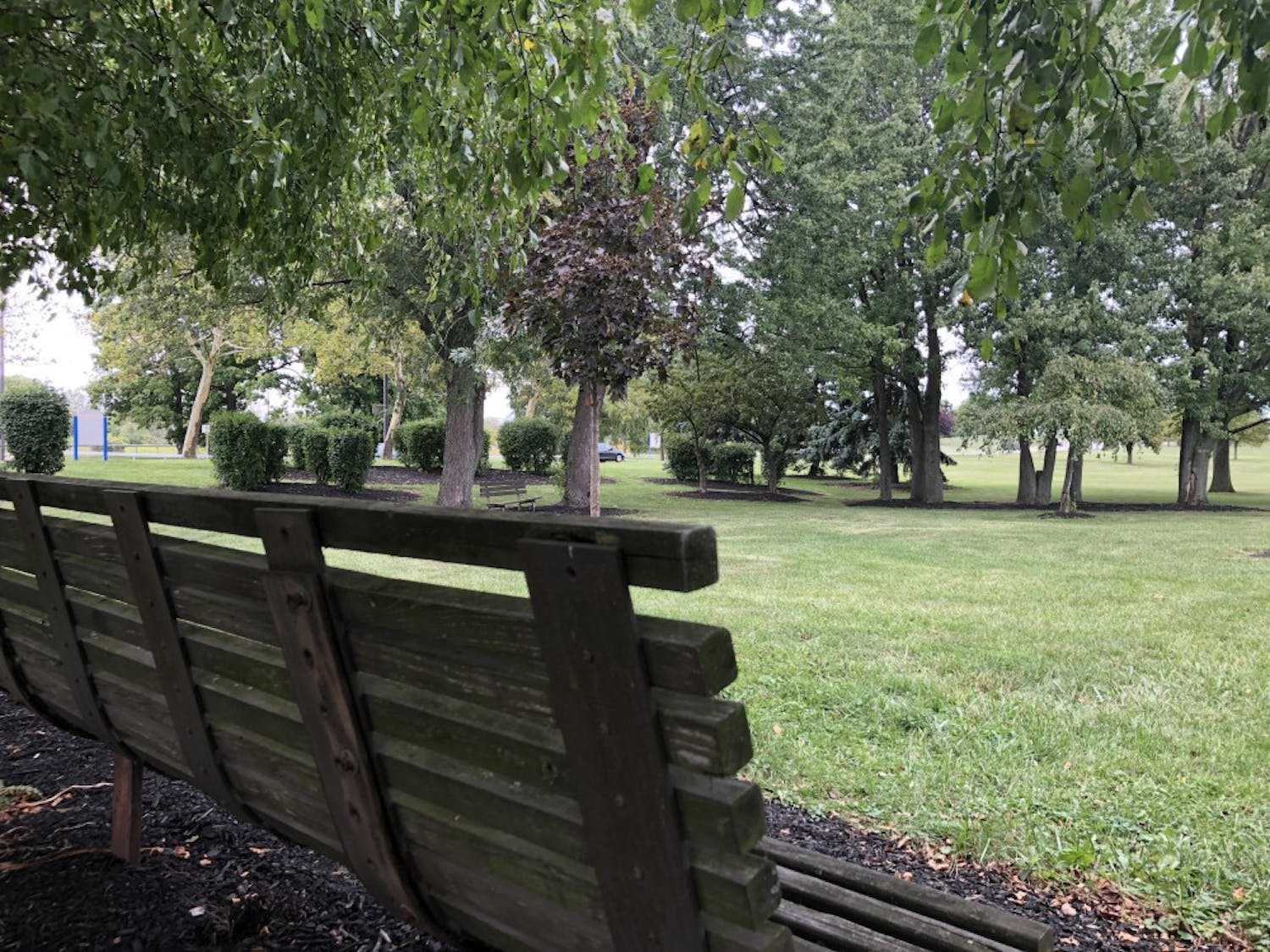"""The Puffer Grove, located on North Campus, is one of a number of """"secret"""" locations students don't tend to use. The grove features a moderate display of environmental growth, and has shades of serenity despite the nearby highway."""