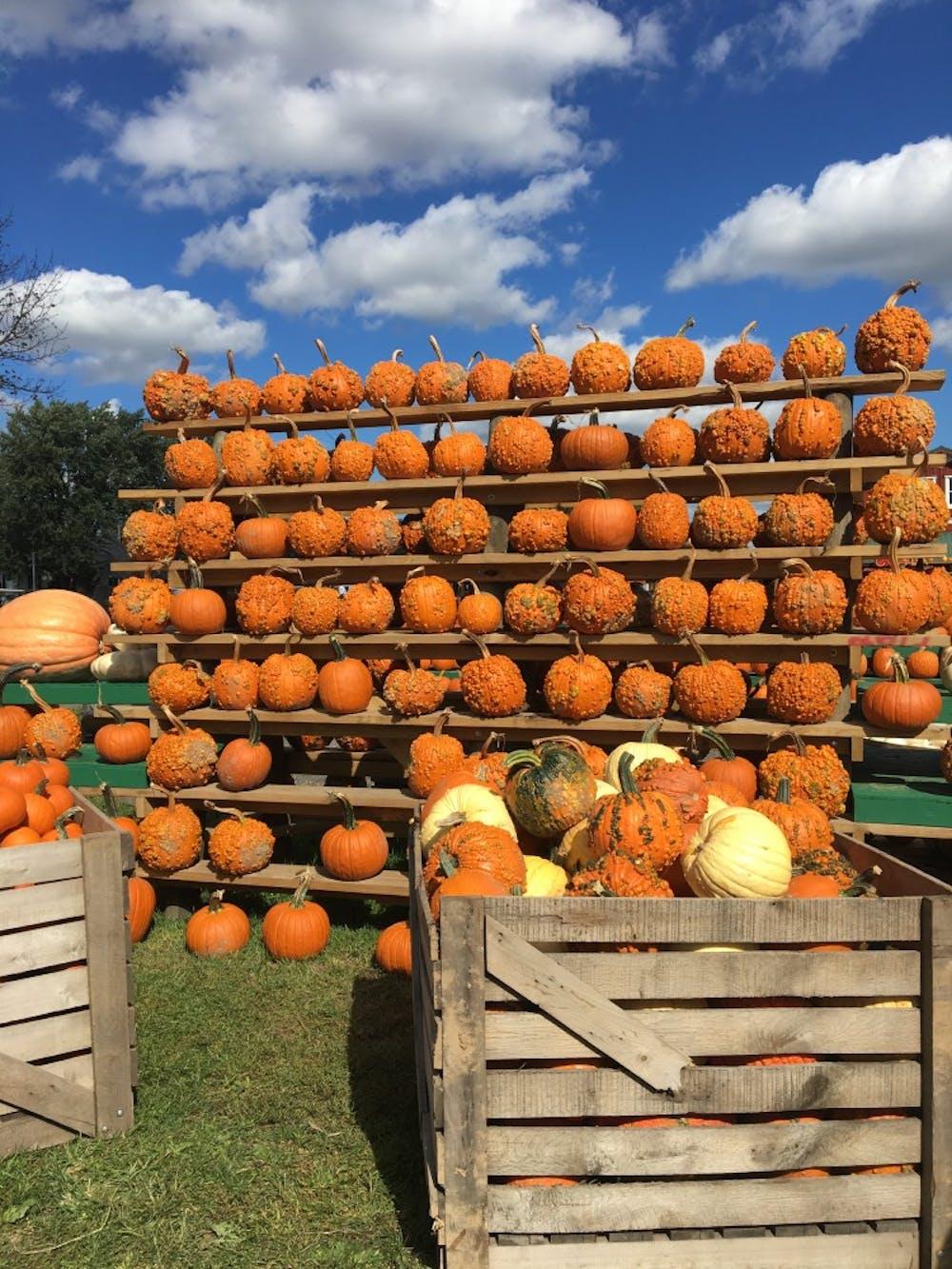 pumpkin-farm-1