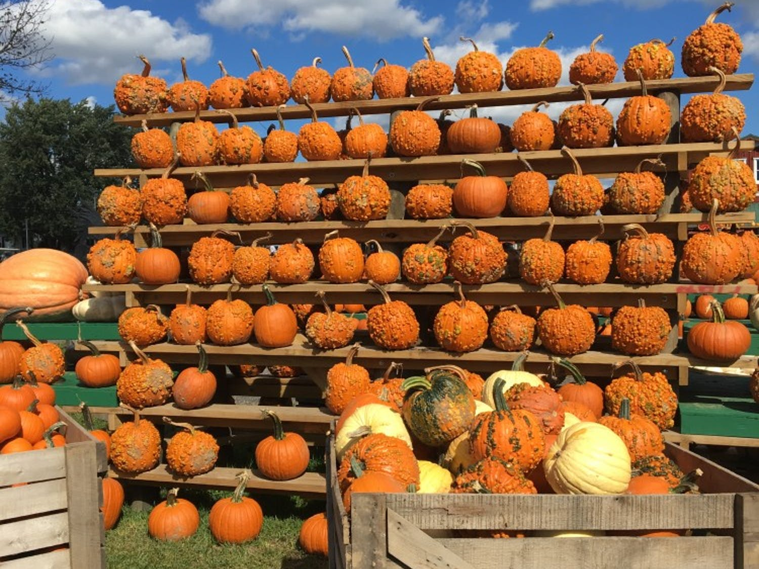 The Great Pumpkin Farm in Clarence is a classic addition to the fall-season roster. The farm has hundreds of pre-picked gourds for patrons to choose.
