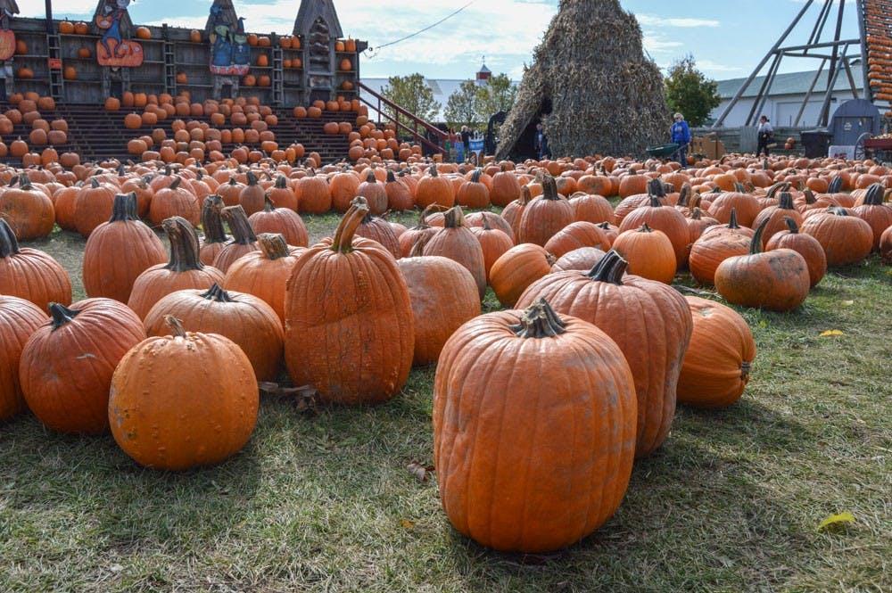 pumpkinpatches2