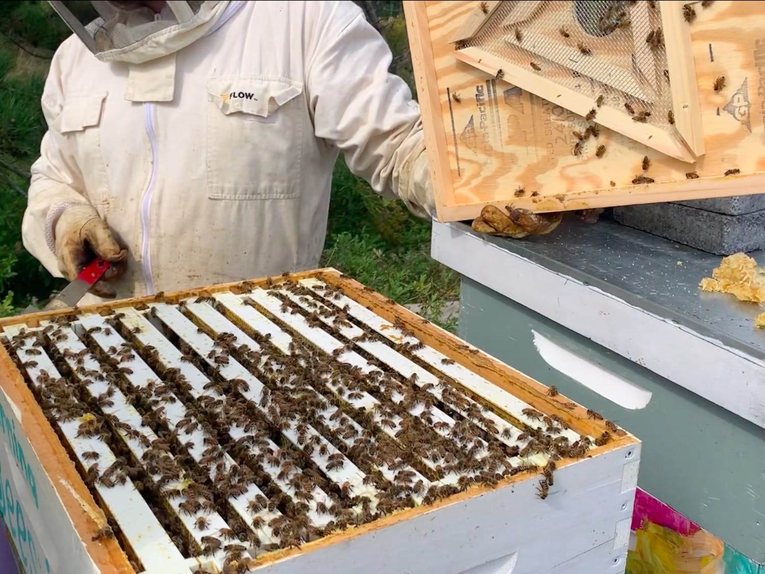 UB Bees director David Hoekstra says putting resources toward sustainable practices like beekeeping is well worth the investment.