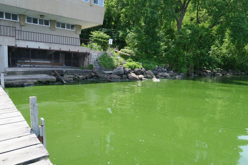On June 7, the summer's first blue-green algae bloom turned much of Lake Mendota a thick, putrid green color. Regional climate models show that Madison will become warmer and wetter over the course of the century — conditions that may make blooms like this more frequent.